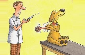 Akcja szczepienia psów przeciwko wściekliźnie
